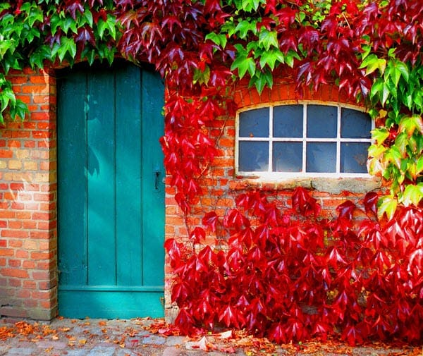 fall colors on door