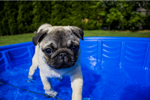 pet pools from hot tub water