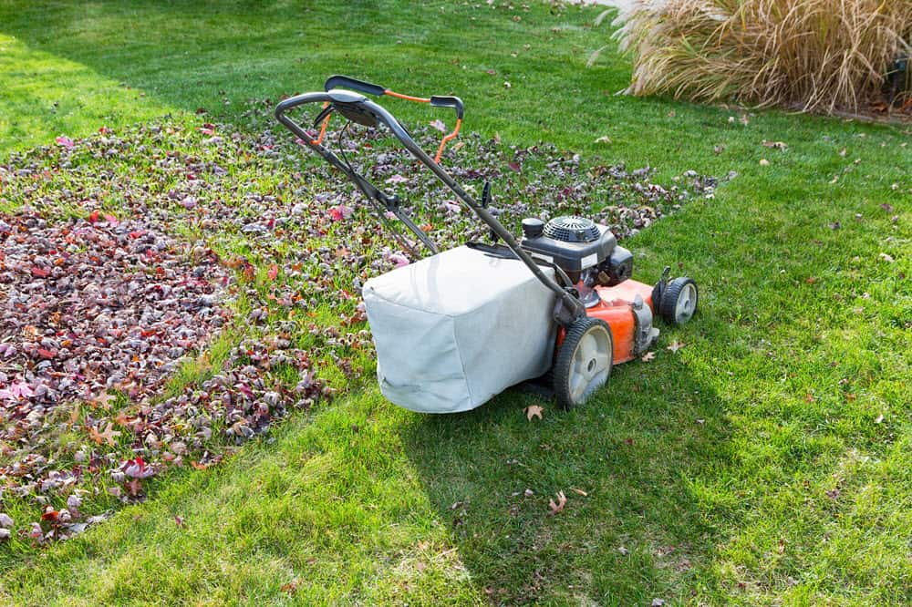 dealing with the lawn in the fall