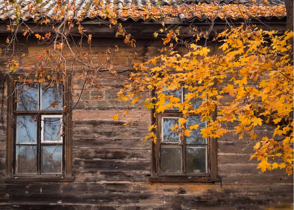 windows for washing in fall