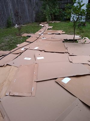 mulch from cardboard sheets