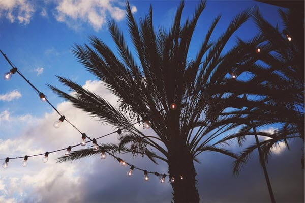 stringed lights on palm tree