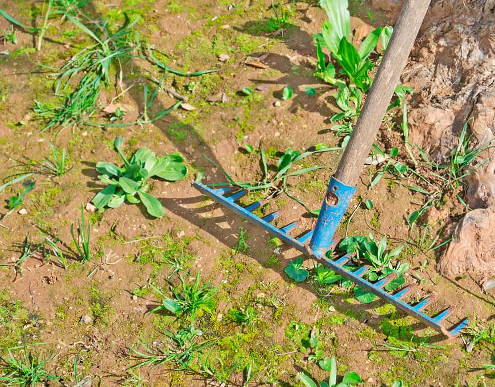 blue metal rake