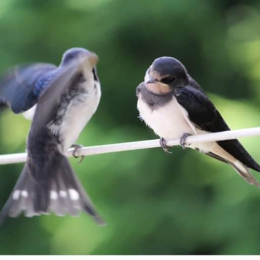 birds on outdoor lights