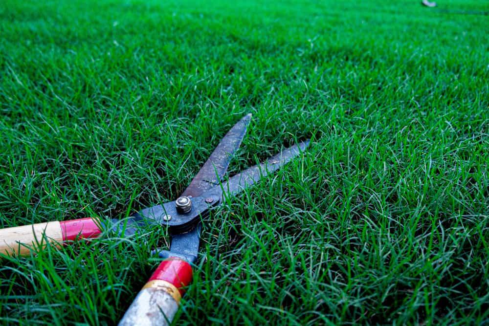 cutting shears to cut grass