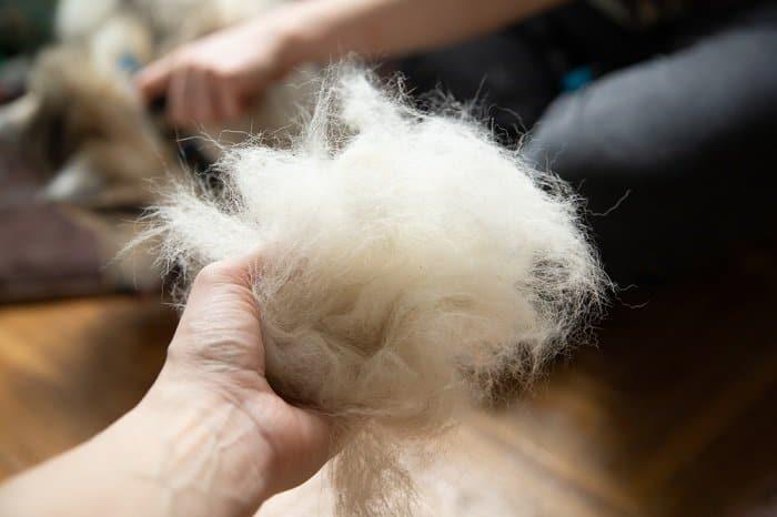 dog hair to keep deer from eating hydrangeas