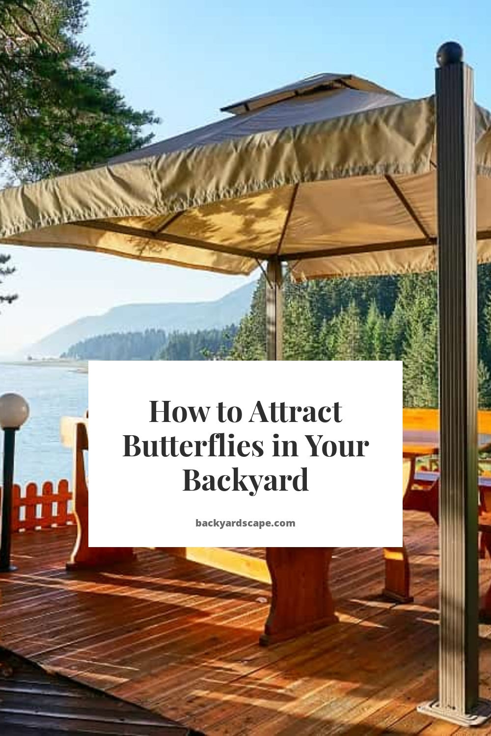 How to Attract Butterflies in Your Backyard
