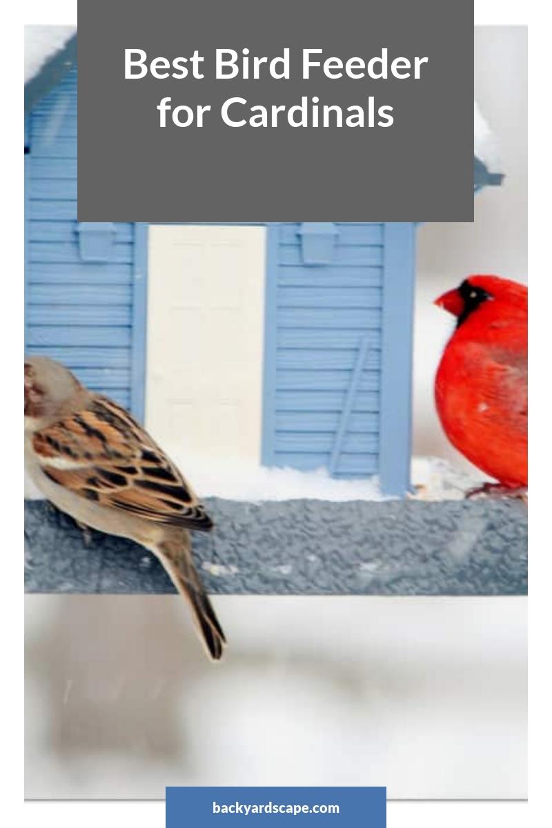 Best Bird Feeder for Cardinals