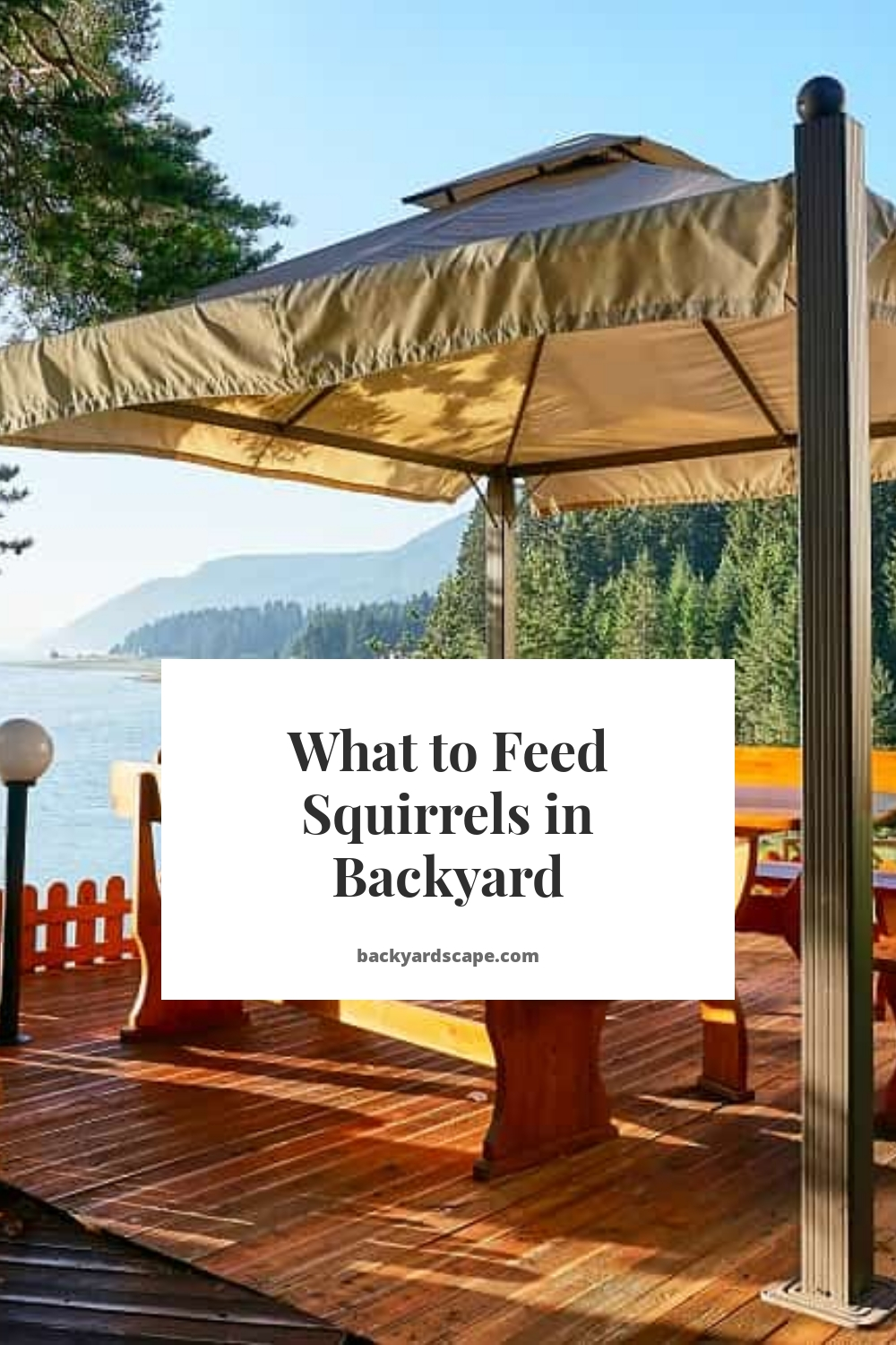 What to Feed Squirrels in Backyard