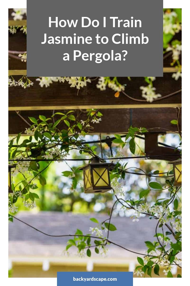 How Do I Train Jasmine to Climb a Pergola?