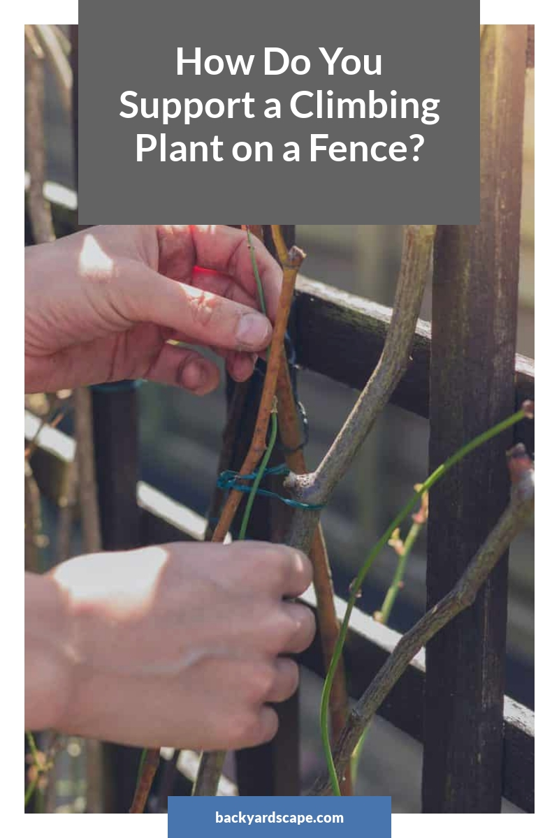 How Do You Support a Climbing Plant on a Fence?