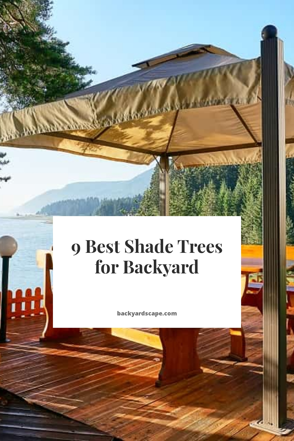 9 Best Shade Trees for Backyard