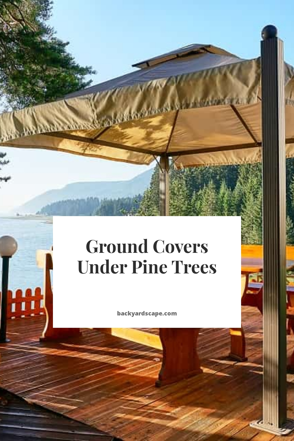 Ground Covers Under Pine Trees