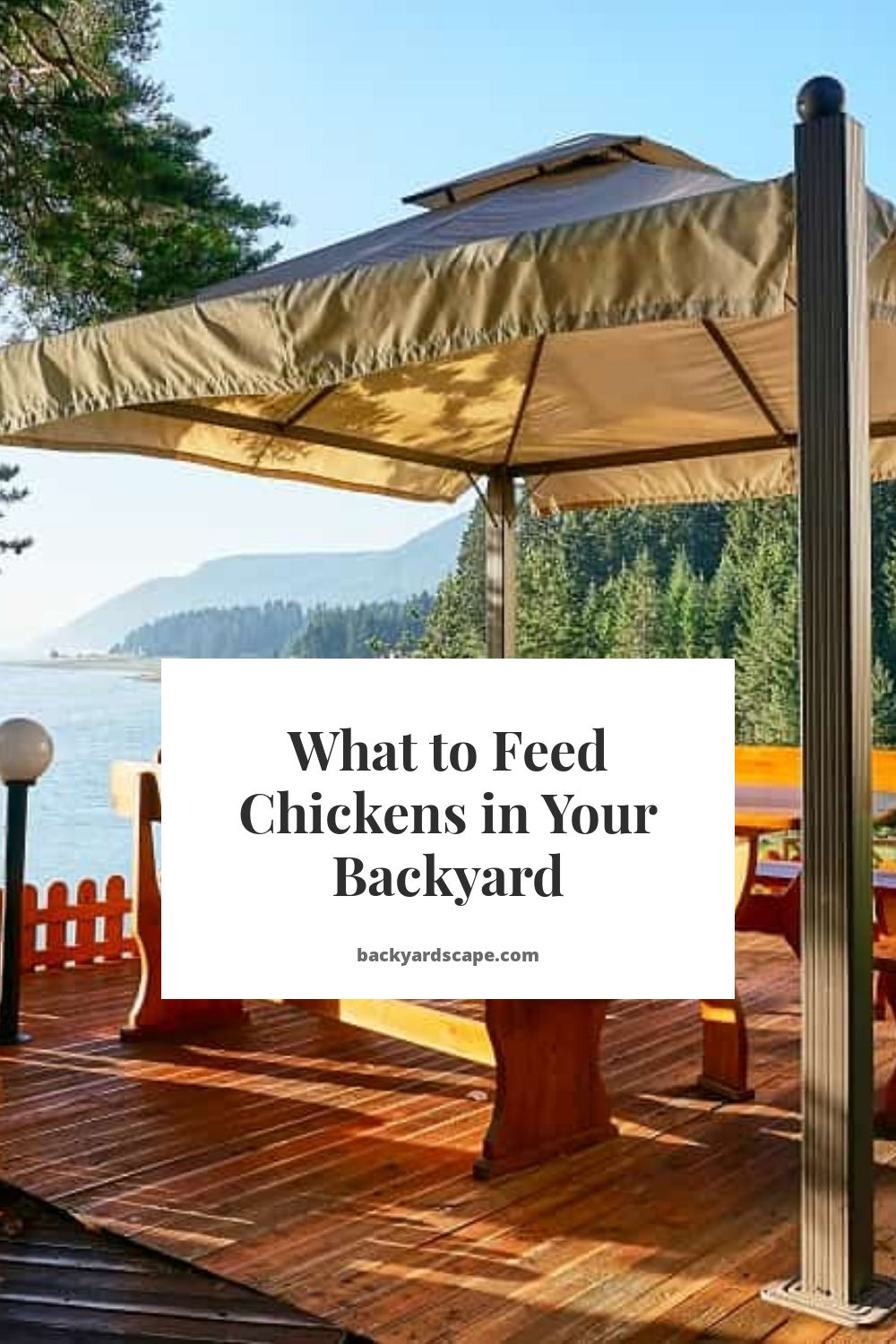 What to Feed Chickens in Your Backyard